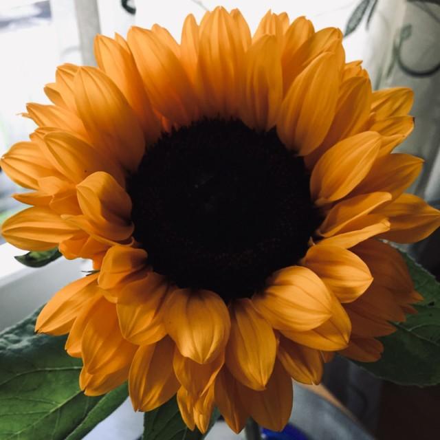 auringonkukka.jpg