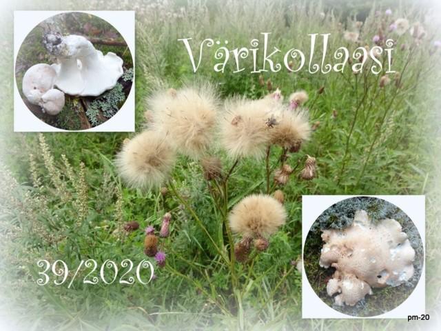 2020-09-08.jpg