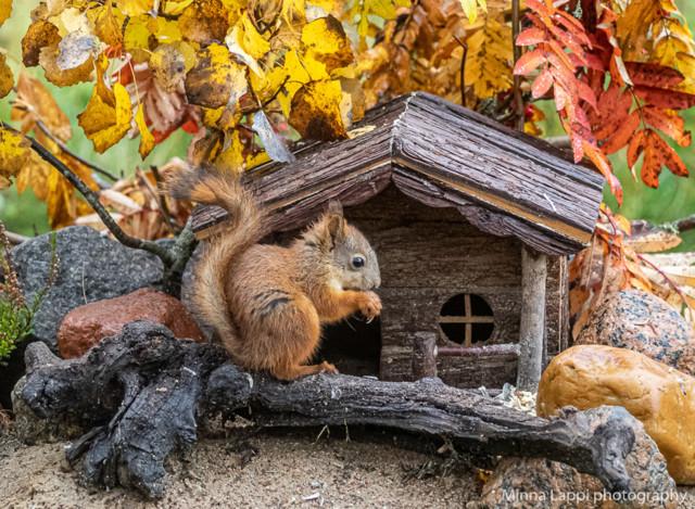 Oravien%20seuraajat-5.jpg