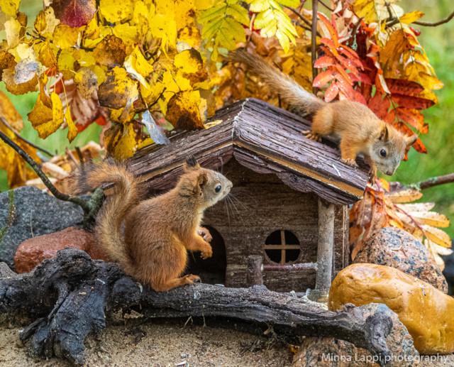 Oravien%20seuraajat-7.jpg