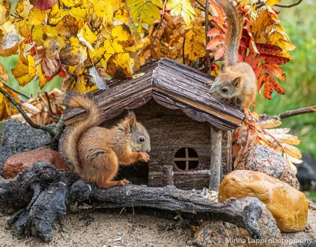 Oravien%20seuraajat-8.jpg