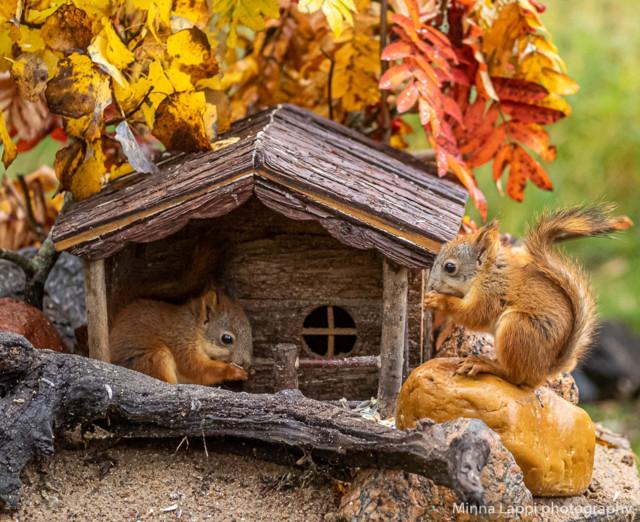 Oravien%20seuraajat-10.jpg