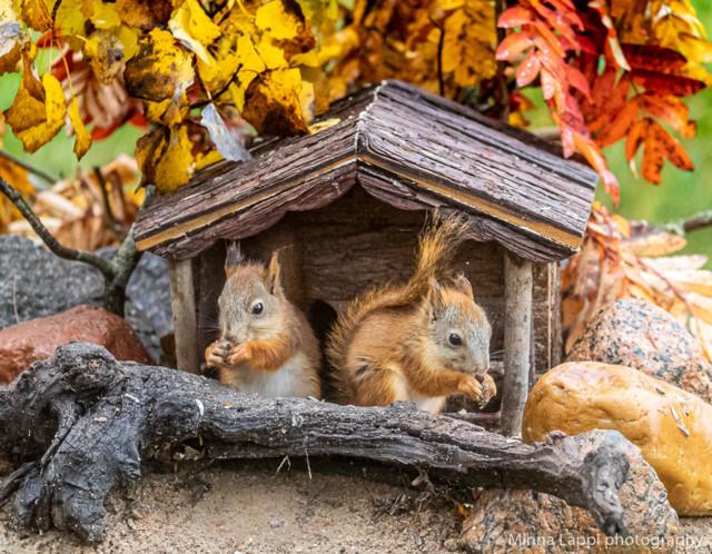 Oravien%20seuraajat-12.jpg