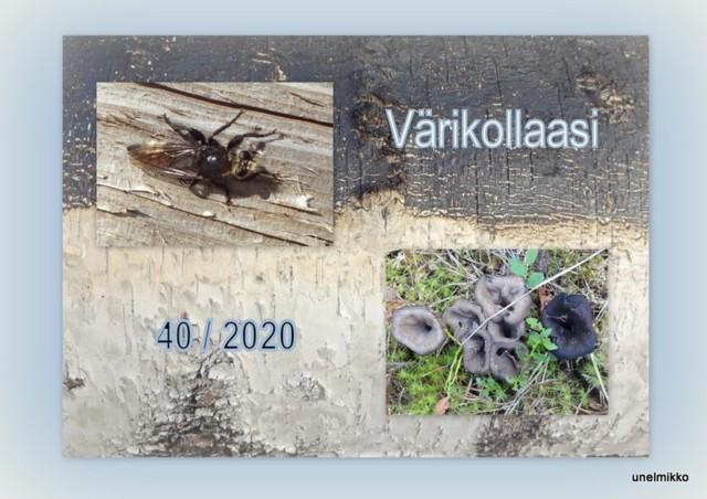 2020-08-29.jpg