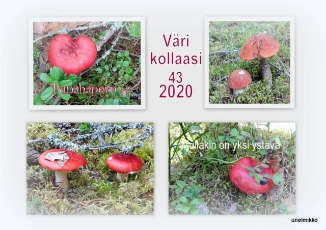 2020-08-092.jpg