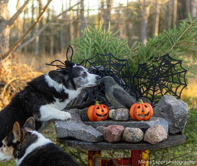 Halloween-tunnelmaa.jpg