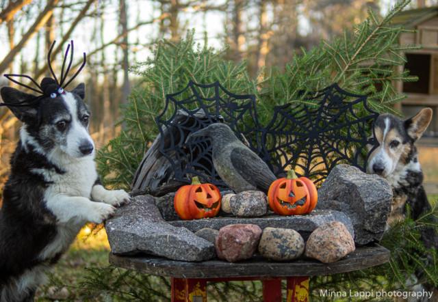 Halloween-tunnelmaa-2.jpg