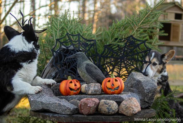 Halloween-tunnelmaa-3.jpg