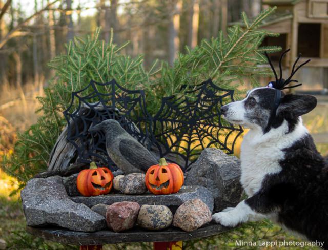 Halloween-tunnelmaa-4.jpg
