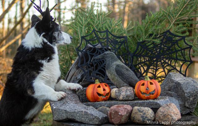 Halloween-tunnelmaa-5.jpg