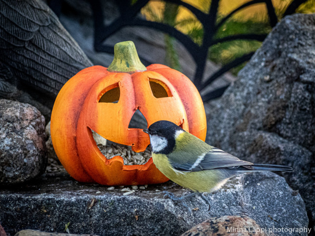 Halloween-tunnelmaa-7.jpg