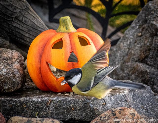 Halloween-tunnelmaa-8.jpg