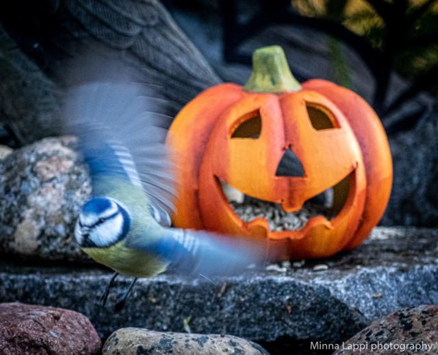Halloween-tunnelmaa-10.jpg