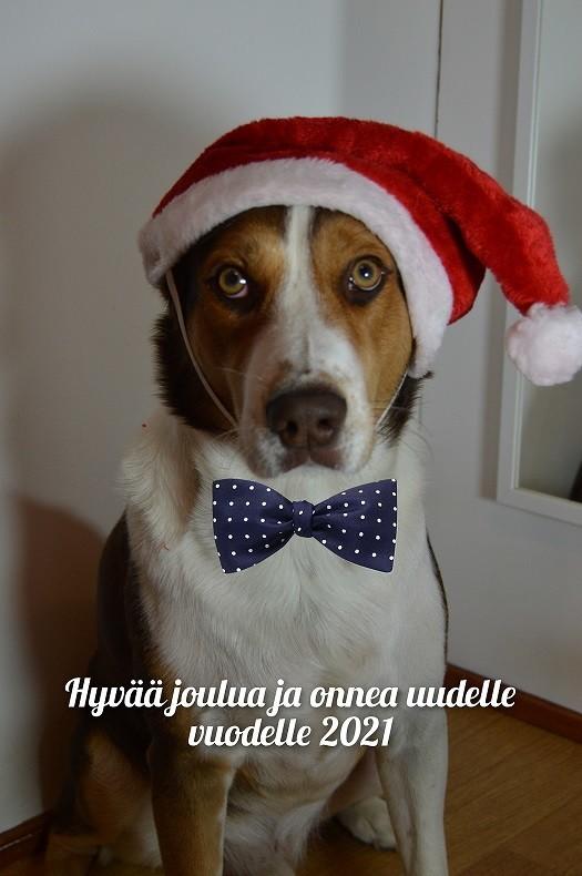 joulukortti.jpg