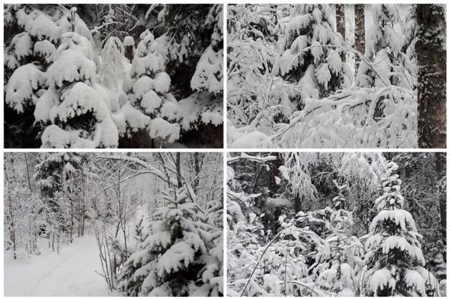 Talvi%20tammikuussa.jpg
