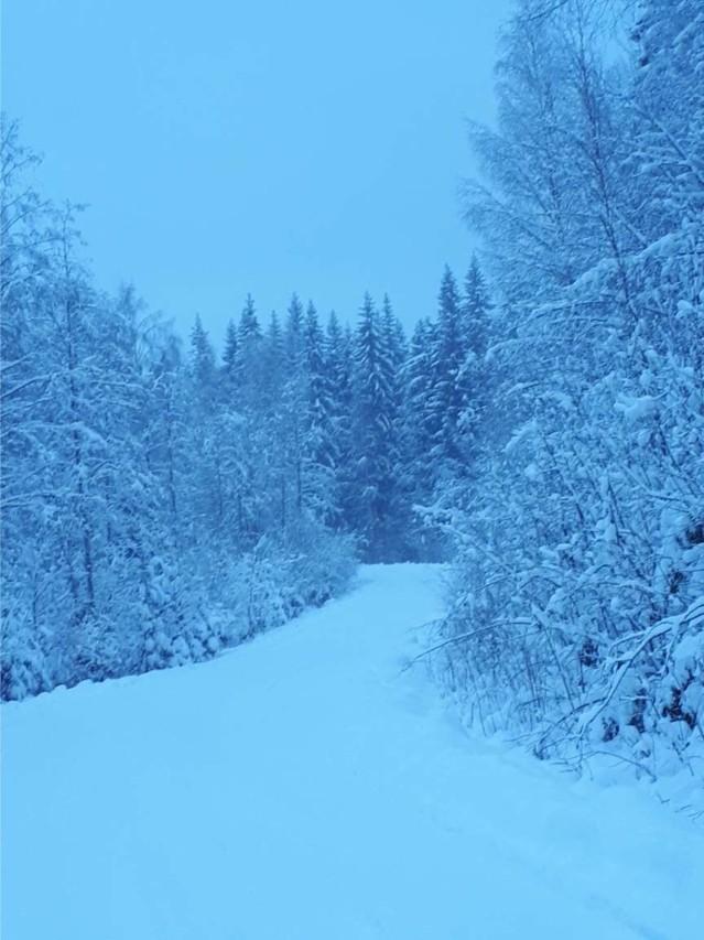 Luminen%20mets%C3%A4tie.jpg
