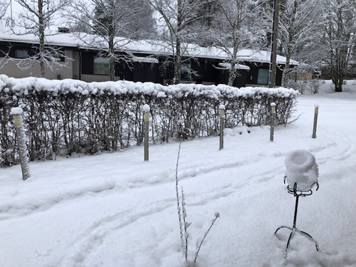 lunta1.jpg