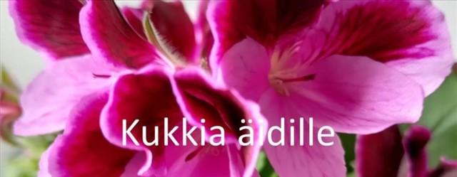 kukka1_850x331.jpg