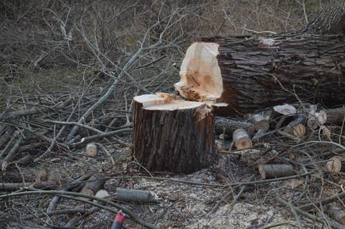 puua.jpg