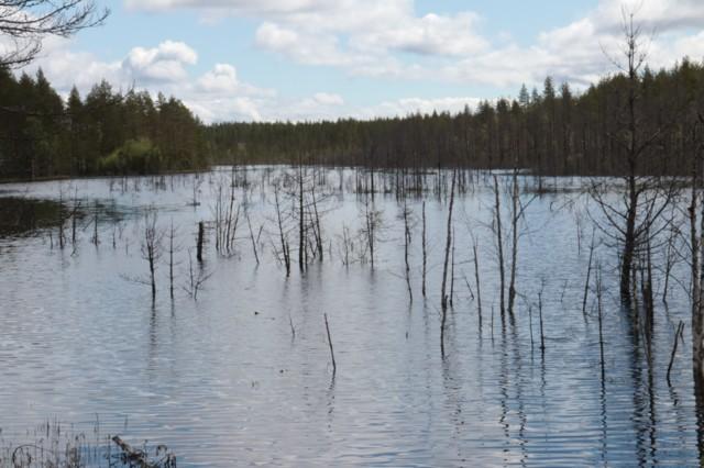 Vedenvallassa.jpg