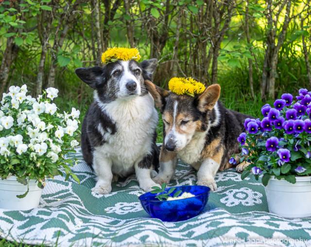 Kukkaispojat-2.jpg