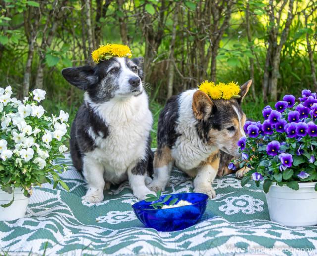 Kukkaispojat-3.jpg