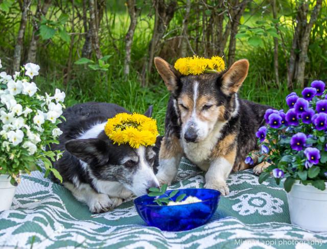 Kukkaispojat-4.jpg