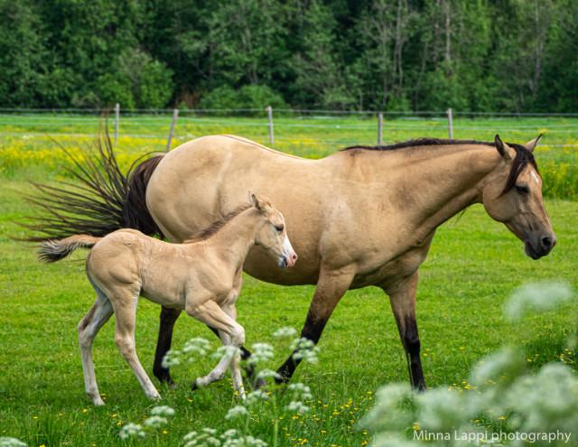 Hevosia%20katselemassa-6.jpg