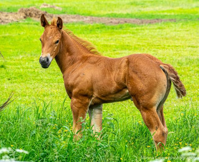Hevosia%20katselemassa-8.jpg