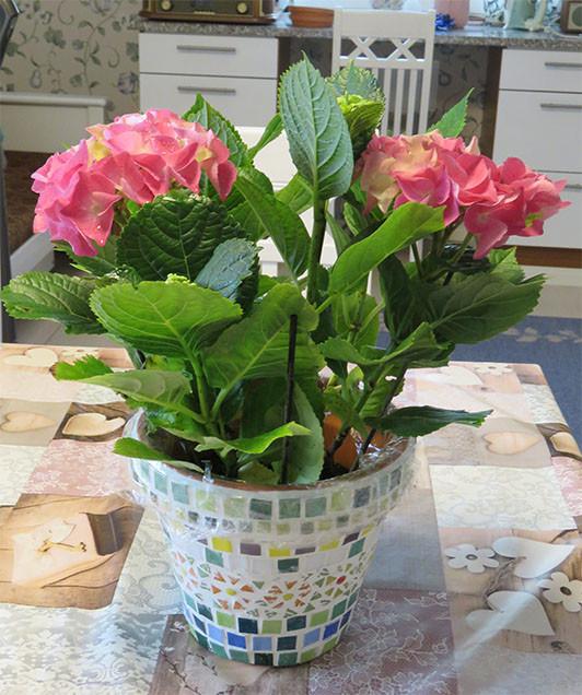 kukkisruukku%20kukkien%20kanssa.jpg