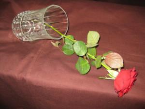 kaatunut ruusu.jpg