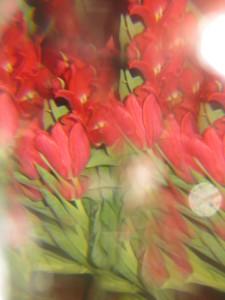 kukkia prismalla 026.JPG