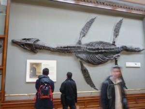 tn_fossiili.JPG